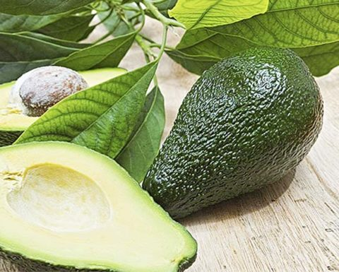 ILLNESSES TO TREAT WITH AVOCADO LEAVES